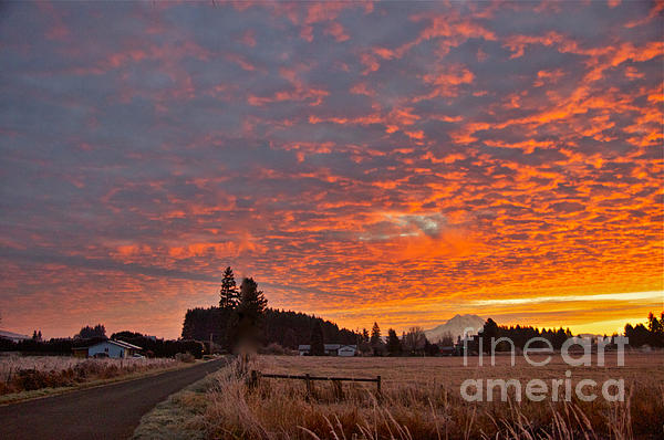 Mount Rainier Dawn Photograph
