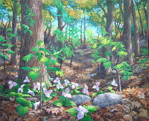 Mount Royal Trilliums Painting  - Mount Royal Trilliums Fine Art Print