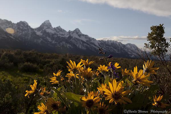 Mountain Flowers Print by Charles Warren