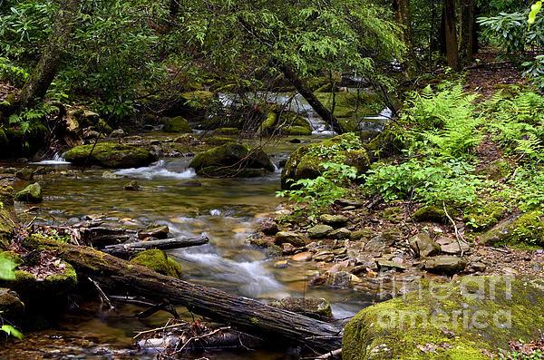Mountain Stream Spring Print by Thomas R Fletcher