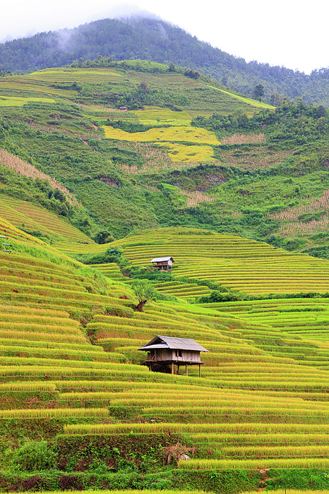 Mountainous Rice Field Print by Akari Photography