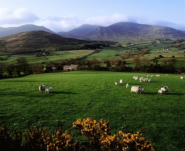 Mourne Mountains From Trassey Road, Co Print by The Irish Image Collection