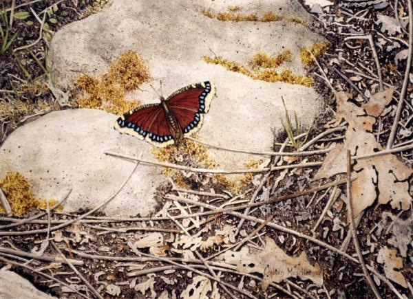 Mourning Cloak Painting  - Mourning Cloak Fine Art Print