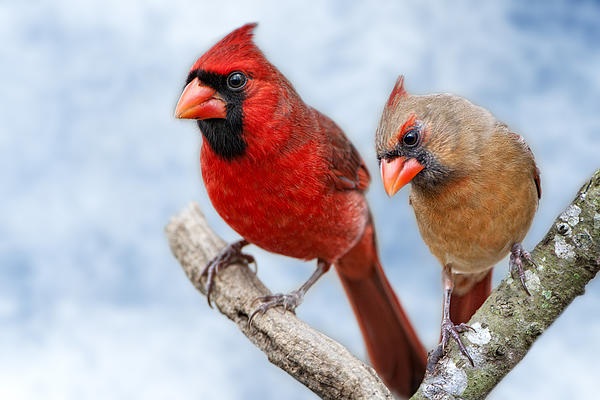 Bonnie Barry - Mr. and Mrs. Cardinal