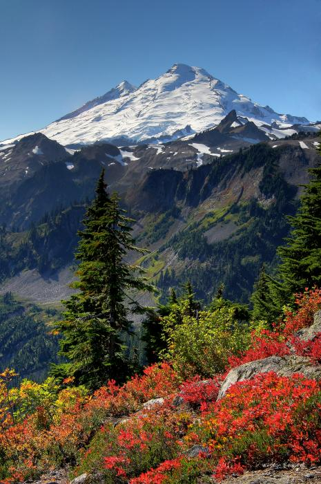 Mt. Baker Autumn Print by Winston Rockwell