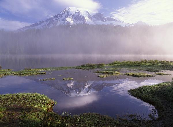 Mt Rainier An Active Volcano Encased Print by Tim Fitzharris