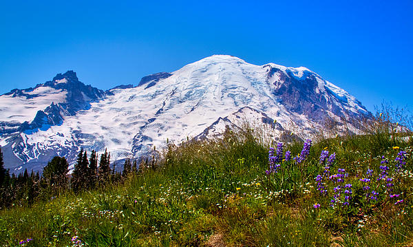 Mt Rainier Meadow With Lupine Print by David Patterson