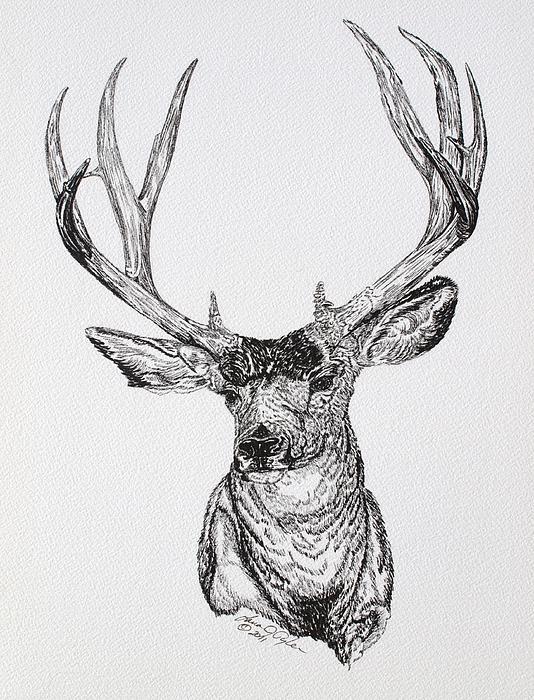 Mule Deer Buck Print by Lana Tyler