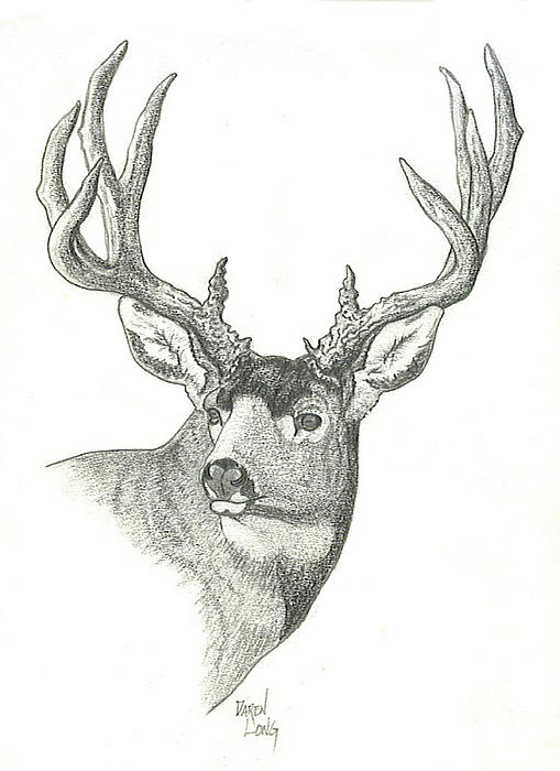 mule-deer-buck-sketch-daren-long jpgDrawings Of Deer Bucks