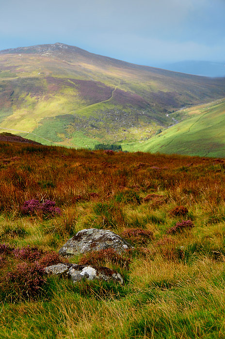 Multicolored Hills Of Wicklow. Ireland Print by Jenny Rainbow
