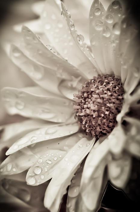 Carole Murray - Mum in the Rain