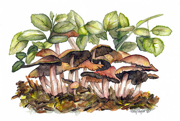 Terry Taylor - Mushroom Forest