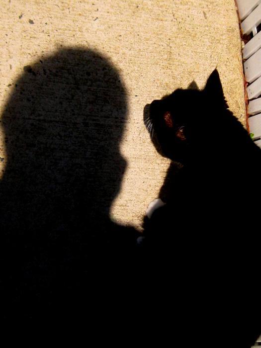 Allen n Lehman - My Cat And I