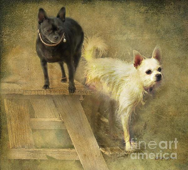 Rhonda Strickland - My Chihuahua Girlz