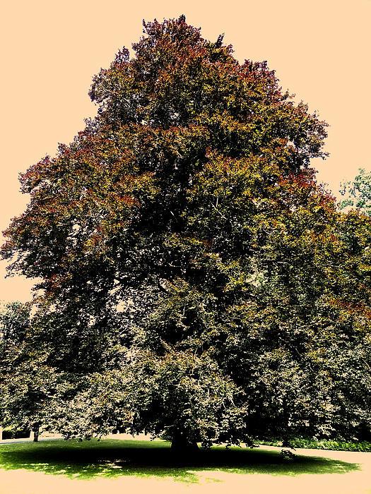 My Friend The Tree Print by Juergen Weiss