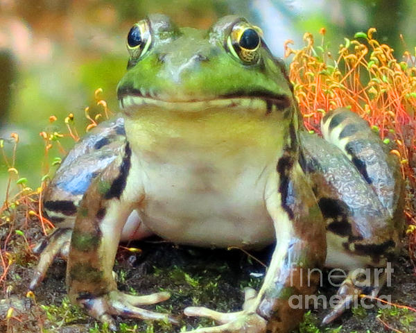 My Frog Friend Print by Patricia Januszkiewicz