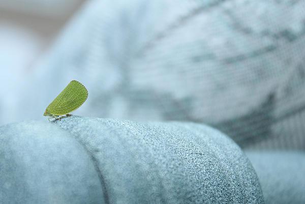 My Little Green Friend Print by Nina Mirhabibi