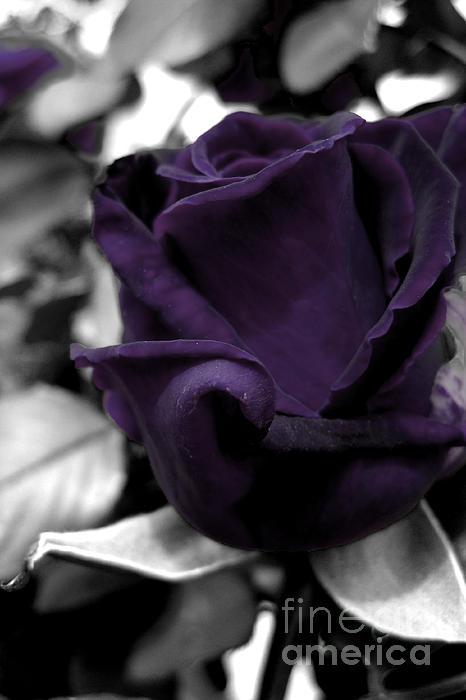 Amber Sherman - My Rose B