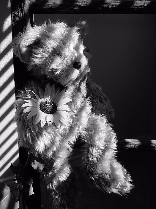 Lynnette Johns - My Teddy Bear