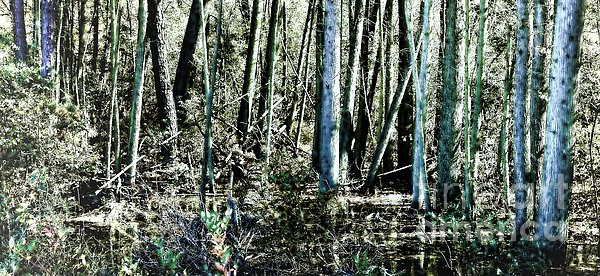 Mystery Forest Print by Olivier Le Queinec