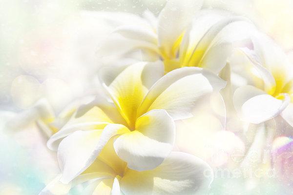 Na Lei Pua Melia Aloha E Ko Lele - Yellow Tropical Plumeria Maui Print by Sharon Mau