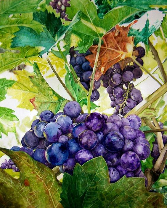 Lance Gebhardt - Napa Harvest