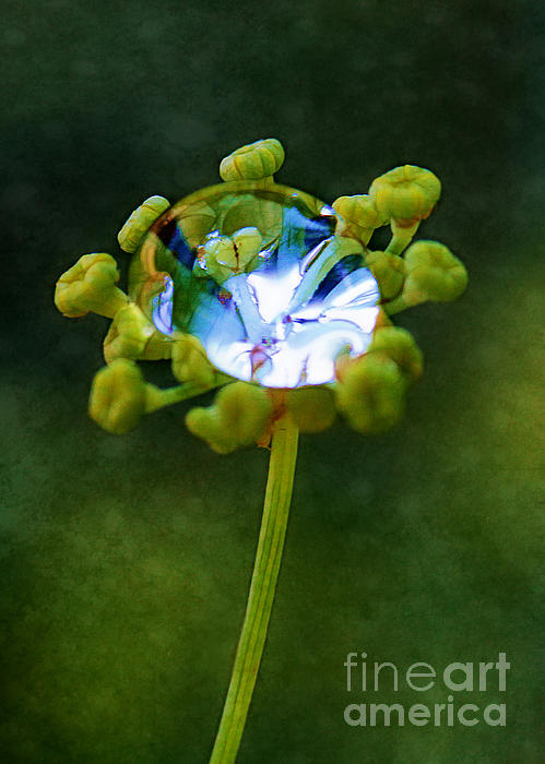 Nature's Diamond Ring Print by Judi Bagwell