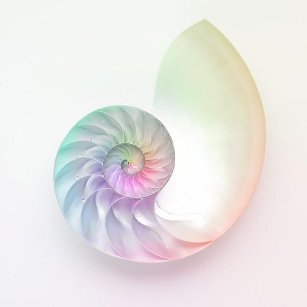 Nautilus Shell Print by Angel Rodriguez