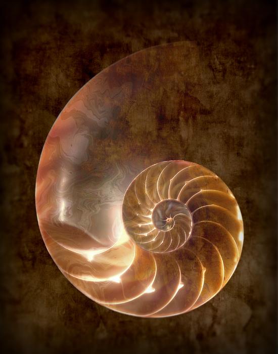 Nautilus Print by Tom Mc Nemar