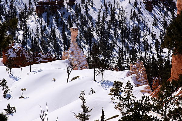 Navajo Loop Trail Print by Viktor Savchenko