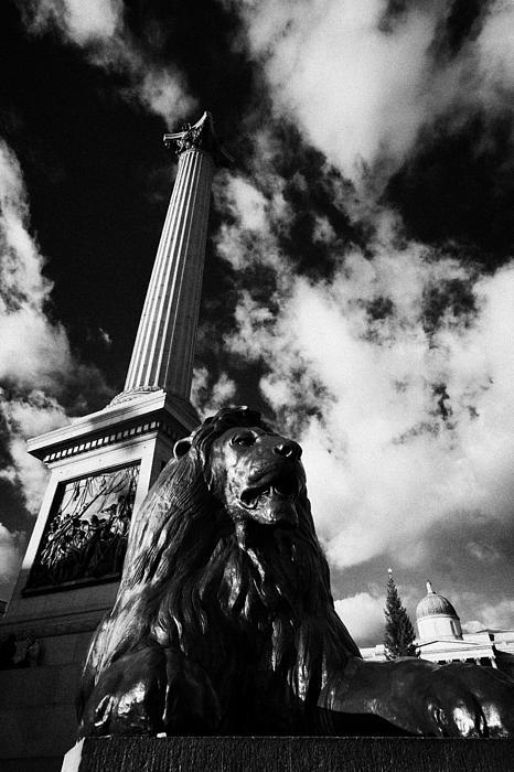 nelsons column and lion inTrafalgar Square London England UK United kingdom Print by Joe Fox