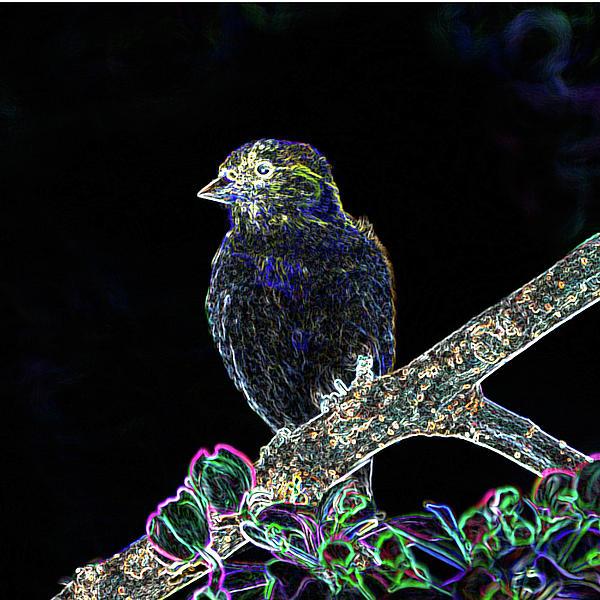 Neon Goldfinch Print by Betty LaRue