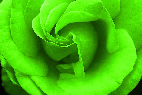 Robyn Stacey - Neon Green Rose