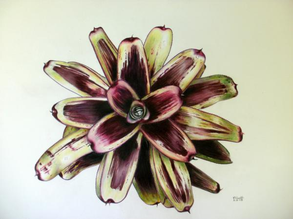 Neoregelia Painted Delight Painting
