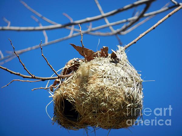 Nest For Rent Print by Alexandra Jordankova