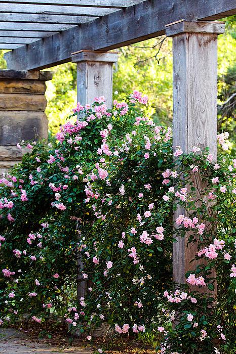 Never Promised You A Rose Garden By Elizabeth Hart