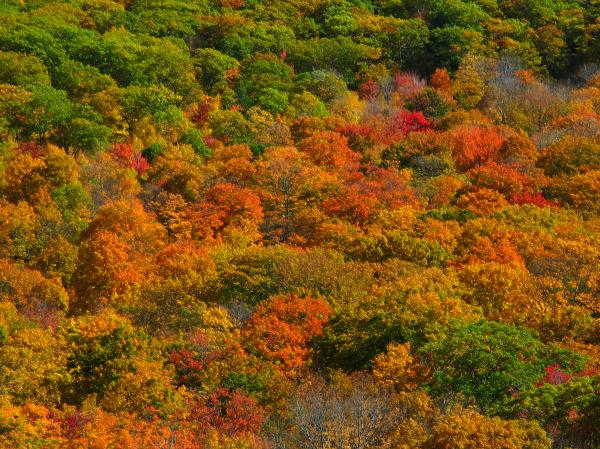 New England Fall Foliage Peak  Print by Juergen Roth