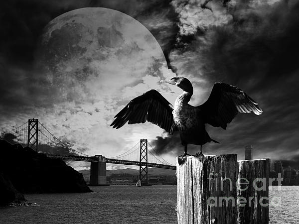 Night of The Cormorant . Black and White Photograph