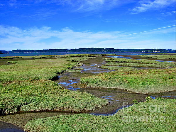 Nisqually Estuary At Low Tide Print by Sean Griffin