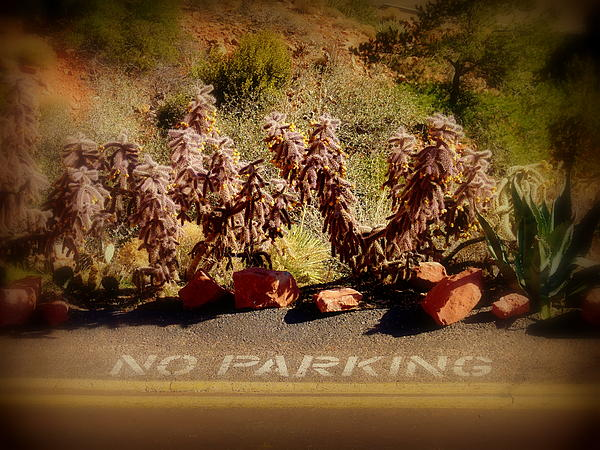 No Parking Print by Cindy Wright