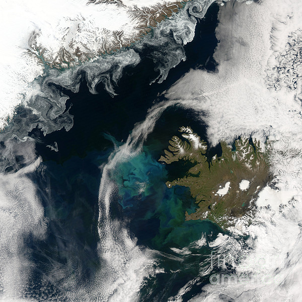 North Atlantic Bloom Print by Science Source