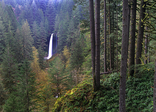 North Falls Silver Falls State Park Print by Tim Fitzharris
