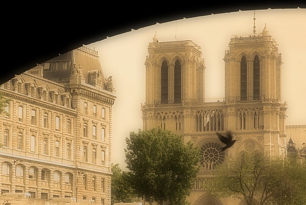 Notre Dame Cathedral Viewed Print by John Sylvester
