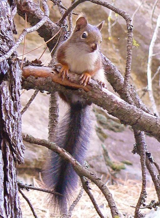 Barbara St Jean - Nut Hunting
