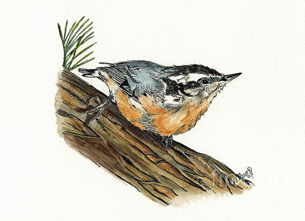 Nuthatch Print by Shari Nees