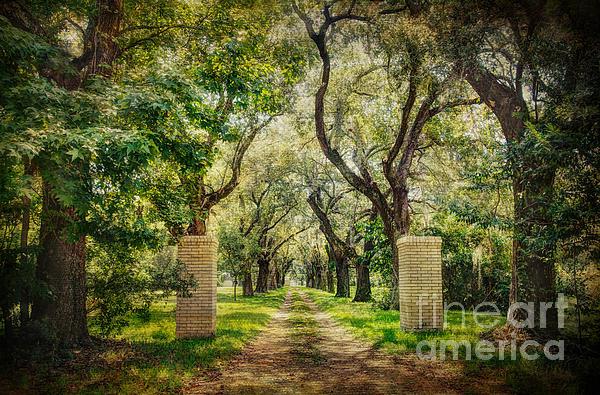Oak Tree Lined Drive Print by Joan McCool