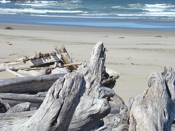 Ocean Beach Driftwood Art Prints Coastal Shore Print by Baslee Troutman