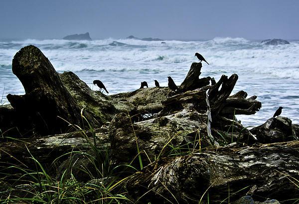 Ocean Beach Dwellers Print by Dale Stillman