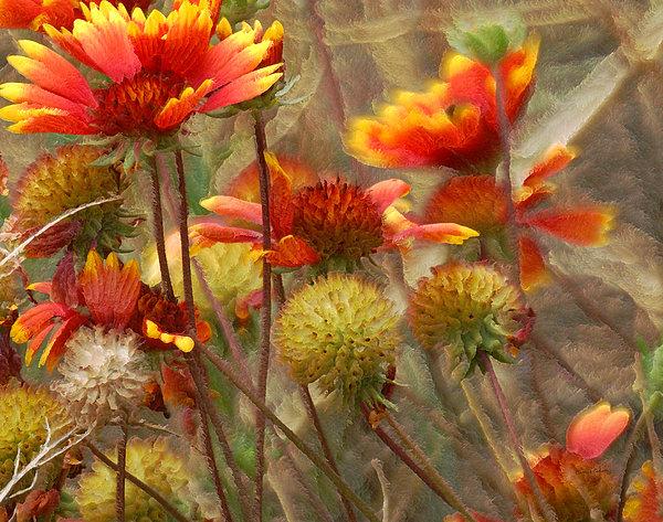 October Flowers 2 Print by Ernie Echols