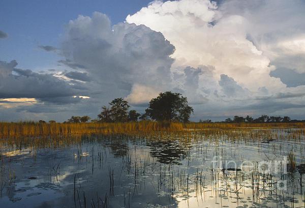 Sandra Bronstein - Okavango Delta Evening